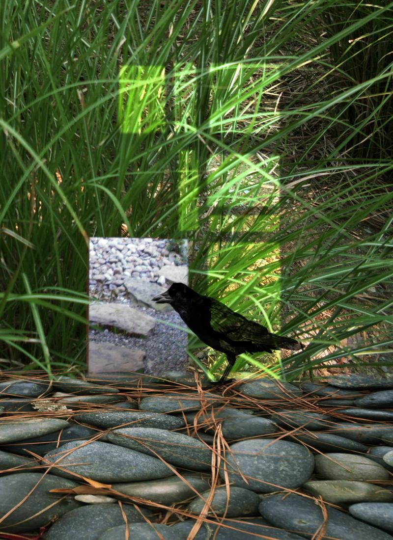 Crow in Grasses
